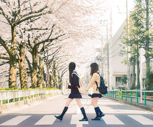 girls, japan, and sakura image