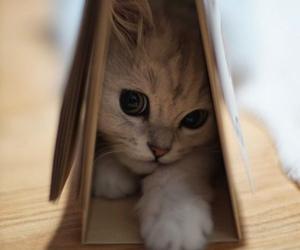 eyes, kitten, and kitty image