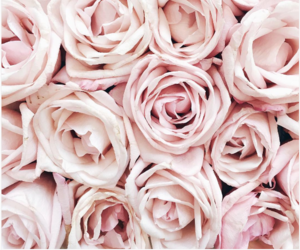 pink, rose, and roses image