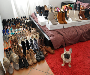 shoes, dog, and heels image