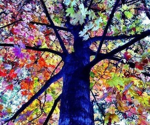 art, colours, and tree image