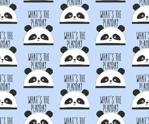 Bleu, panda, and fonddecran image