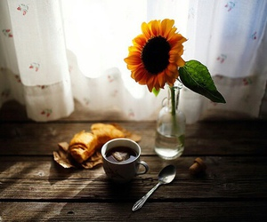 photography, sunflower, and flowers image