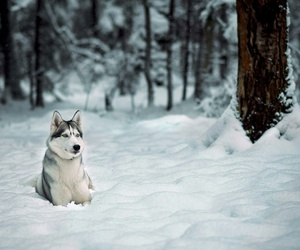 snow, winter, and wolf image