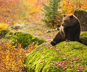 bear, leaves, and world image