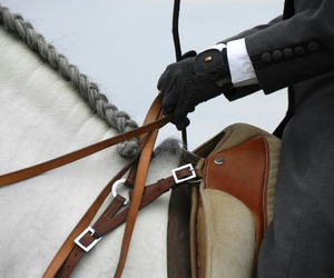 dressage, spain, and horse image