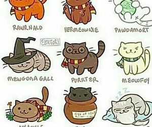harry potter and cat image