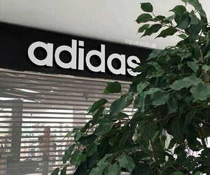 adidas, green, and plants image
