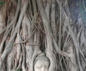 Buddha, roots, and thailand image