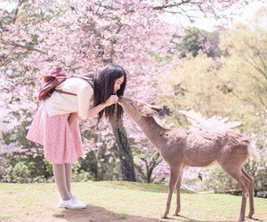 deer, kawaii, and nature image
