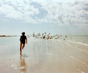 beach, photography, and birds image
