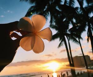 beach, flower, and ocean image