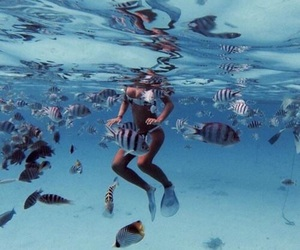 fish, summer, and sea image