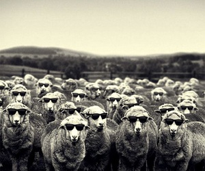 sheep, funny, and black and white image