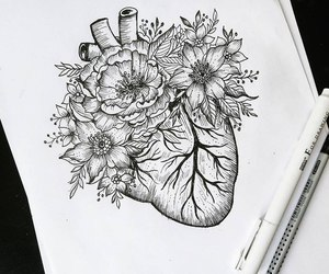drawing, flowers, and heart image
