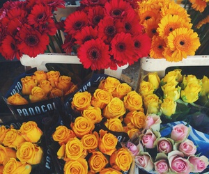 flowers, beauty, and pretty image