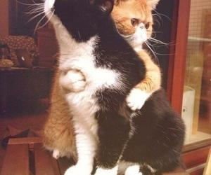 cat, animal, and hug image