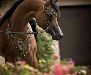horses, فرس, and حصان image