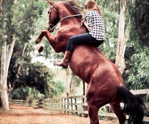 arab, خَيل, and horses image