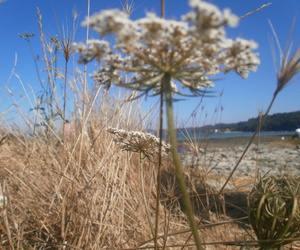 fleur, plage, and mer image