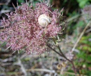 Escargot, nature, and rose image