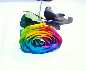 colourful, roses, and present image