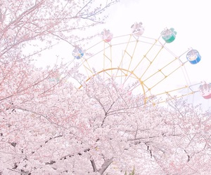 blossoms, cherry blossom, and chic image