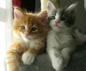 cats, cute, and amazing eyes image