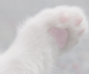 cat, white, and pale image