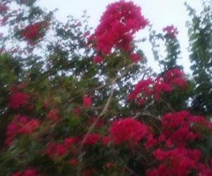 Image by samantha