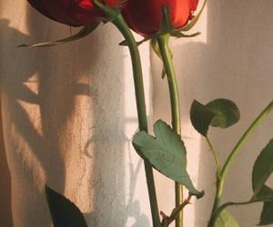 aesthetic, rose, and lockscreen image