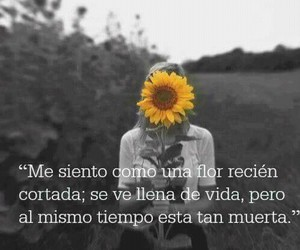 frases, flor, and flowers image