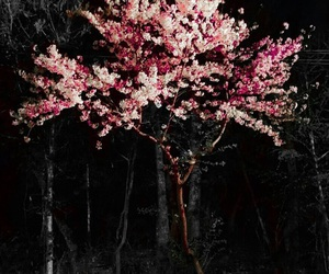 cherry blossom, patterns, and wallpaper image