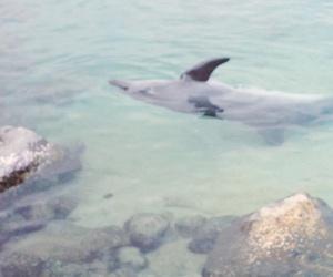 animal, sea, and delfin image