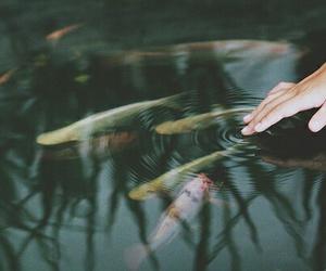 fish and koi image