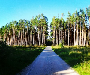 beautiful, estonia, and woods image