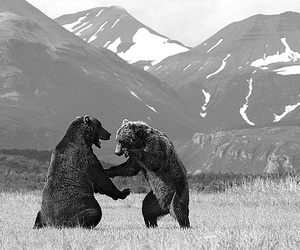 bear, nature, and photography image