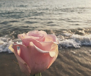 pink, water, and rose image
