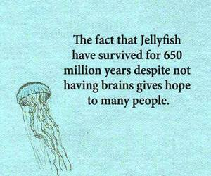funny, lol, and jellyfish image
