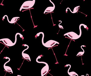 black, pattern, and pink image