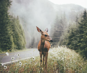 nature, animal, and deer image