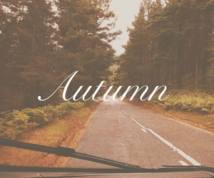 autumn, driving, and fall image