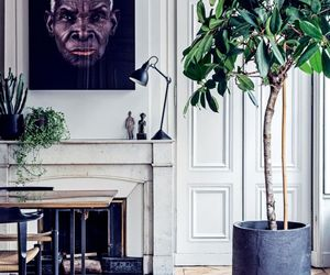 design, plants, and home image