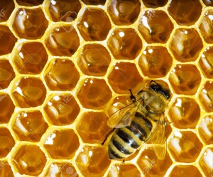 bees, honey, and honeycomb image