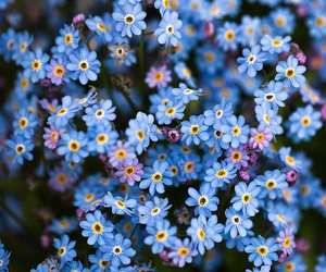 blue, flores, and flowers image