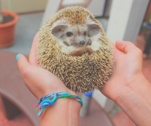 animal, cute, and hedgehog image