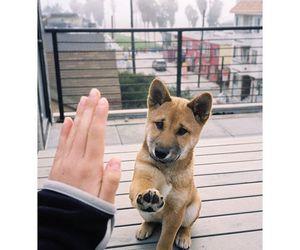 dog, animals, and goals image