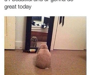 bunny, funny, and quotes image