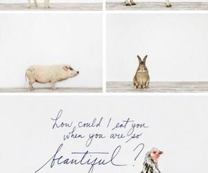 vegan and animals image
