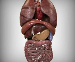 anatomia image